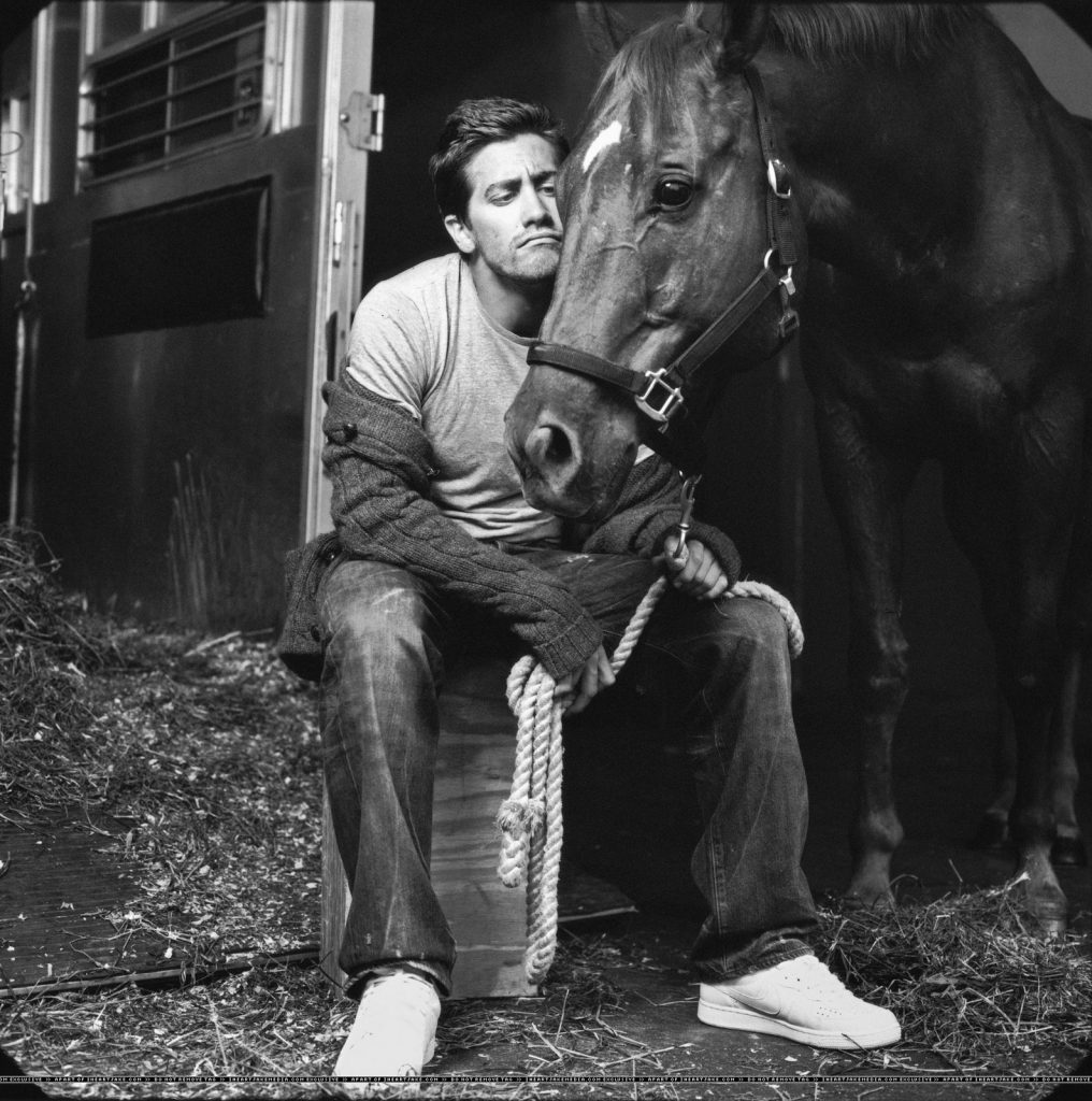 premiere horse