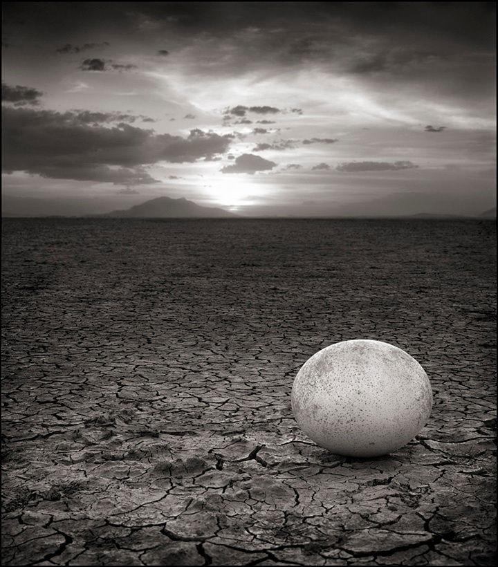Trứng đà điểu bị bỏ rơi, Amboseli, 2007 © Nick Brandt
