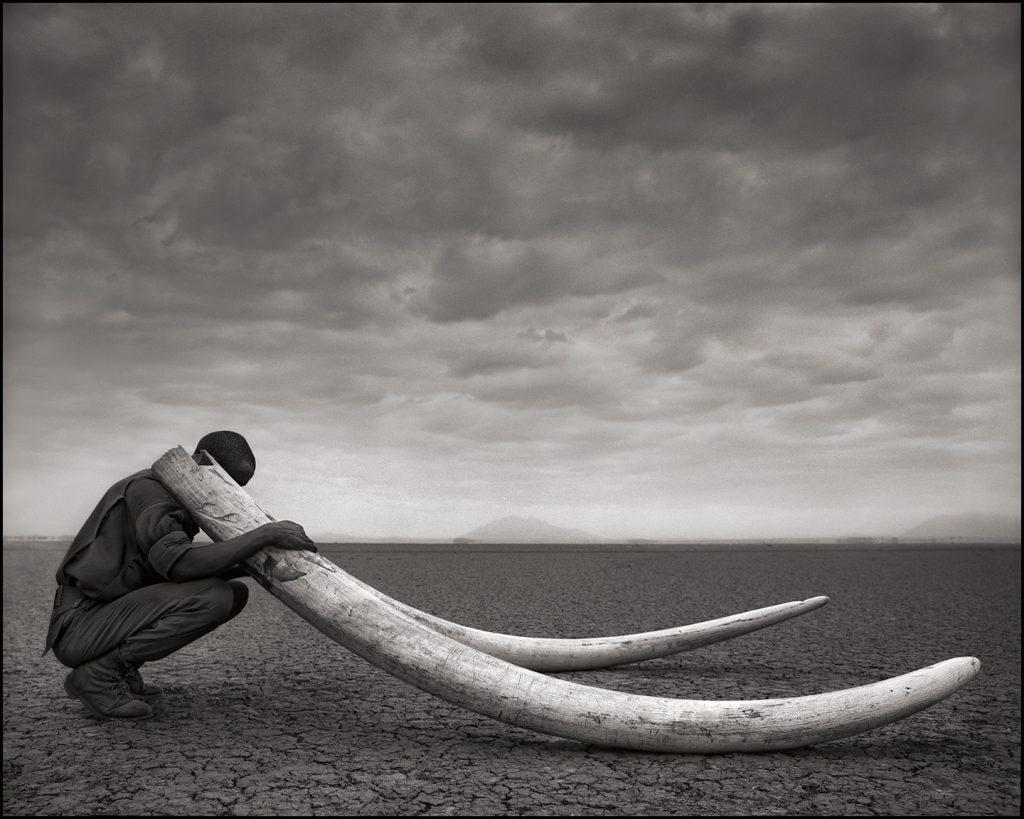 Ngà của những chú voi bị giết, Amboseli, 2011 © Nick Brandt