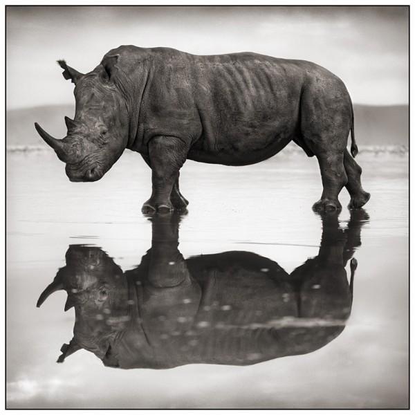 Tê giác bên hồ Nakuru, 2007 © Nick Brandt
