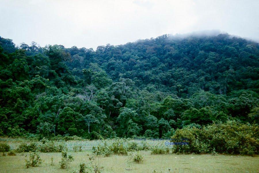 Rừng Cúc Phương, Ninh Bình (Khi đó còn là Hà Nam Ninh), 1985. Vườn quốc gia này có hệ động thực vật phong phú đa dạng mang đặc trưng rừng mưa nhiệt đới. Nhiều loài động thực vật có nguy cơ tuyệt chủng cao được phát hiện và bảo tồn tại đây. Đây cũng là vườn quốc gia đầu tiên tại Việt Nam.