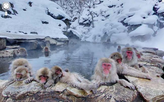 Khỉ tắm suối nước nóng ở Nhật.