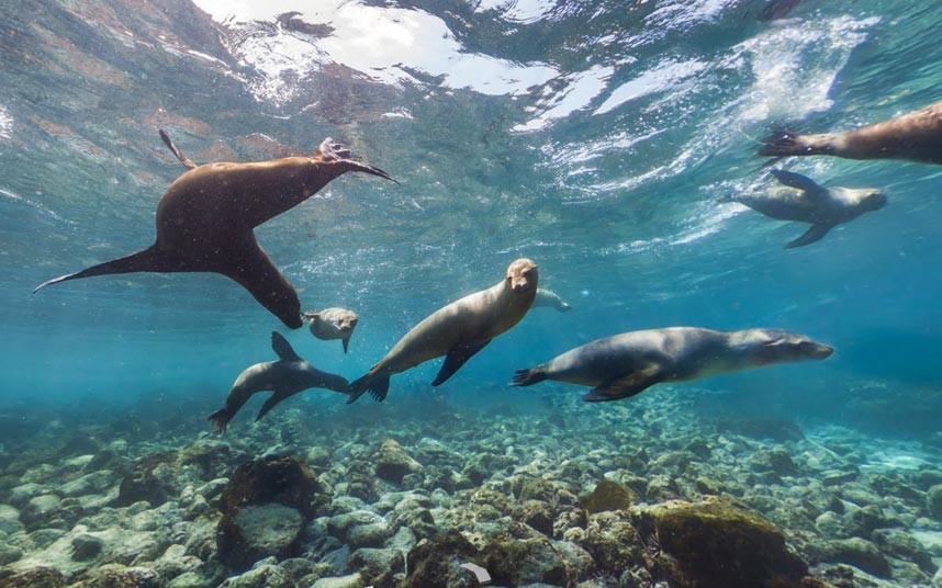 Quần đảo Galapagos.