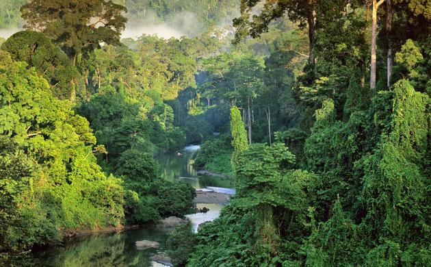 2023. Rừng mưa trên đảo Borneo, hòn đảo lớn thứ ba thế giới đã biến mất hoàn toàn khỏi bản đồ do nạn phá rừng và khí hậu.