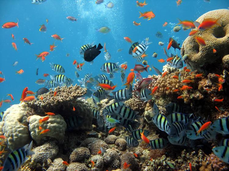 2045-2049. Rất nhiều loài động thực vật dần tuyệt chủng. Rạn san hô Great Barrier Reef ở Úc gần như bị tiêu diệt hoàn toàn, chỉ còn lại 2% diện tích ban đầu. Hơn 50% loài bướm đã biến mất. 30% loài động vật ở Mexico đã tuyệt chủng. Một nửa rừng nhiệt đới Amazon đã biến mất, kéo theo sự tuyệt chủng của hơn 2000 loài cây. 60% động vật đang được bảo tồn hiện nay ở châu Phi tuyệt chủng. 70% gấu trắng ở Cực không còn nữa, và dự đoán đến năm 2080 sẽ biến mất hoàn toàn.