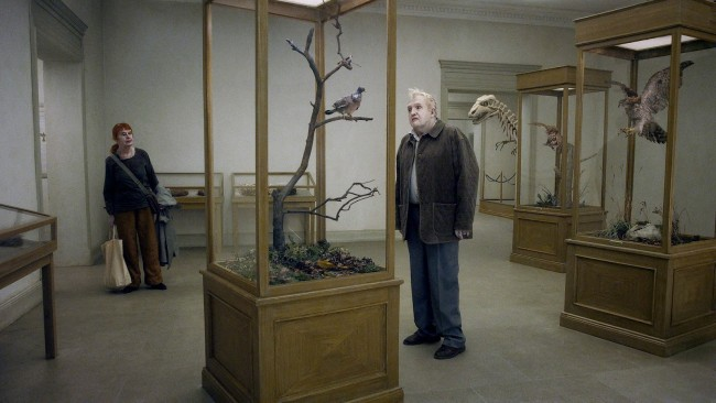 pigeon-sat-on-a-branch-reflecting-on-existence